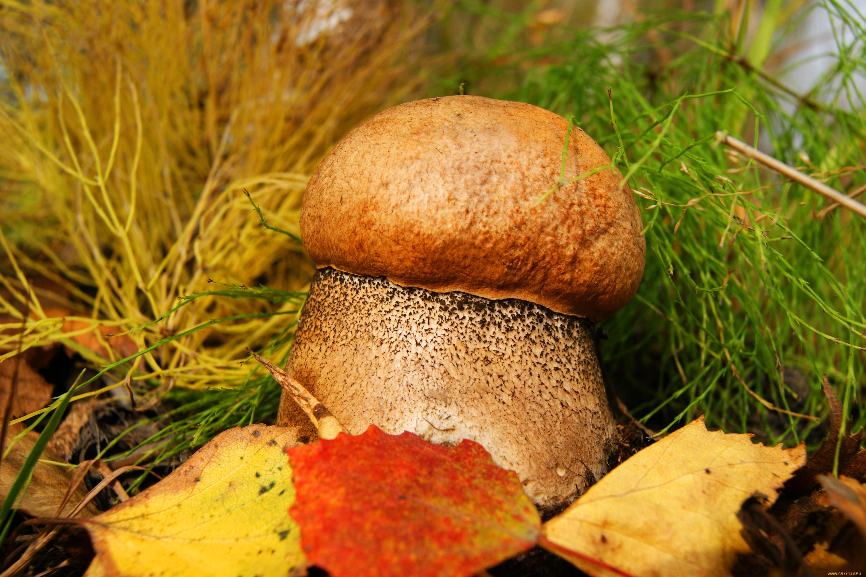 окраске способствует картинки на рабочий стол лес осень грибы картины
